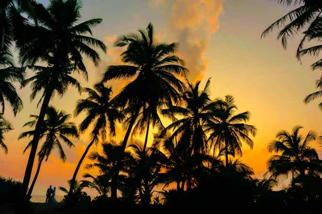 coconut tree during the horizon